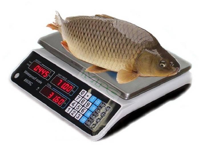 Cân điện tử tính tiền cân cá chống nước