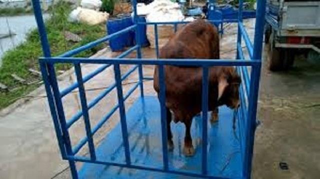 Cân động vật giá rẻ tại Đồng Nai