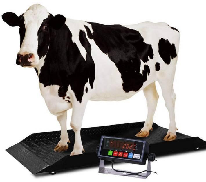 Những lợi ích khi sử dụng cân gia súc